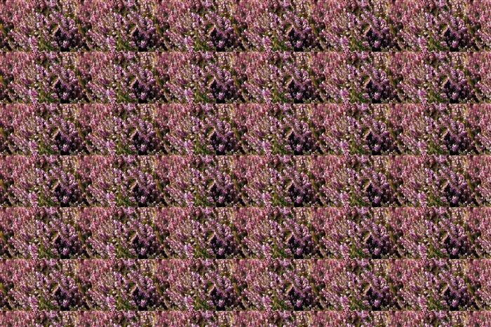 Vinylová Tapeta Růžová vřes pozadí - Květiny