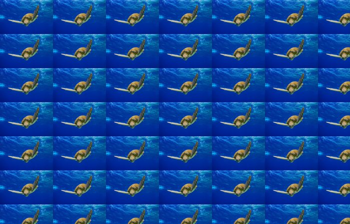 Vinylová Tapeta Green Sea Turtle upadá do modré - Ostatní Ostatní