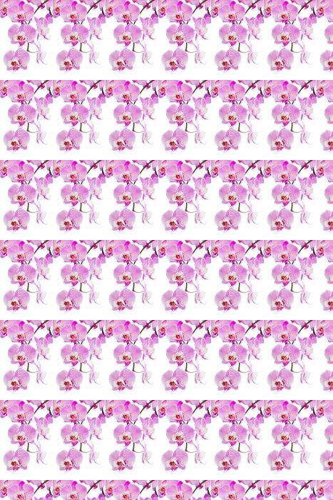 Vinylová Tapeta Růžová orchidej květiny větev zblízka - Témata