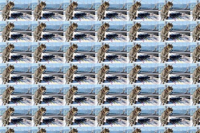 Papier Peint à Motifs Vinyle Skipper chat avec voilier gréement - Bateaux