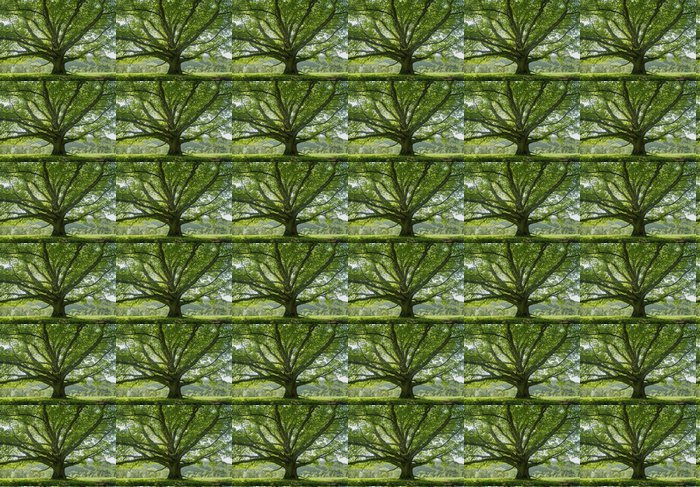 Vinylová Tapeta Oak # 8 - Stromy