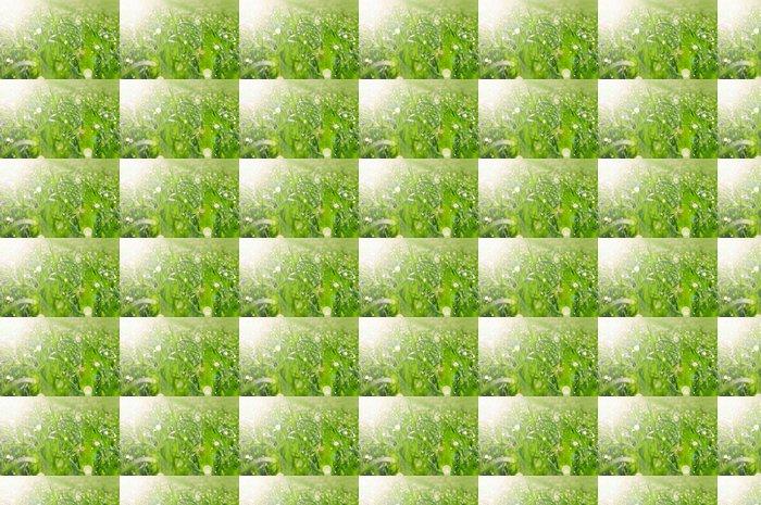 Vinylová Tapeta Skvrny světla od rosy na trávě - Venkov