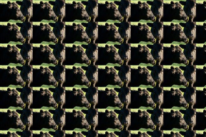 Vinylová Tapeta Aberdeen Angus krávy zblízka - Savci