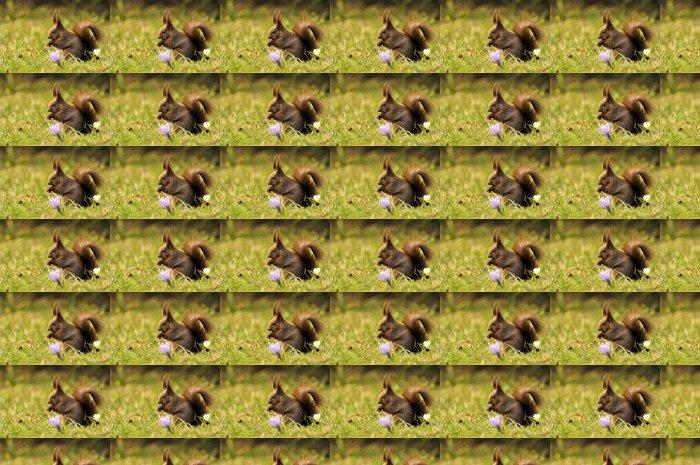 Vinylová Tapeta Red Squirrel - Savci