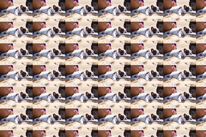 Vinylová Tapeta Francouzský buldoček štěně ležící na pláži - Savci