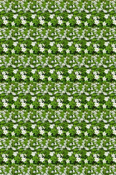 Vinylová Tapeta Vertikální pohled švédských sasanky květiny - Roční období