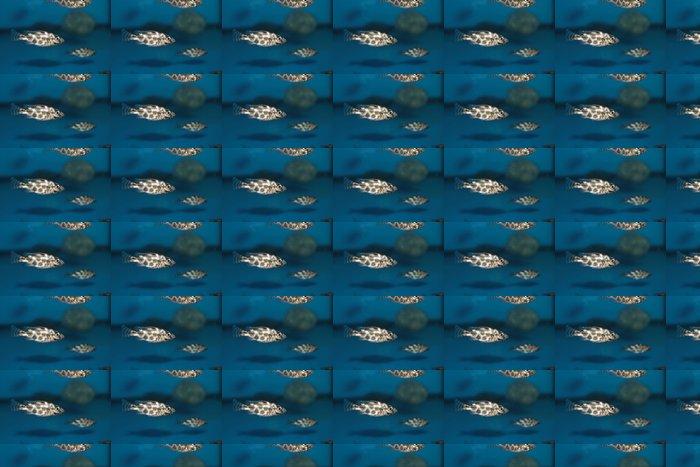 Vinylová Tapeta Livingston je Cichlid (Nimbochromis livingstonii) akvarijní ryby - Vodní a mořský život