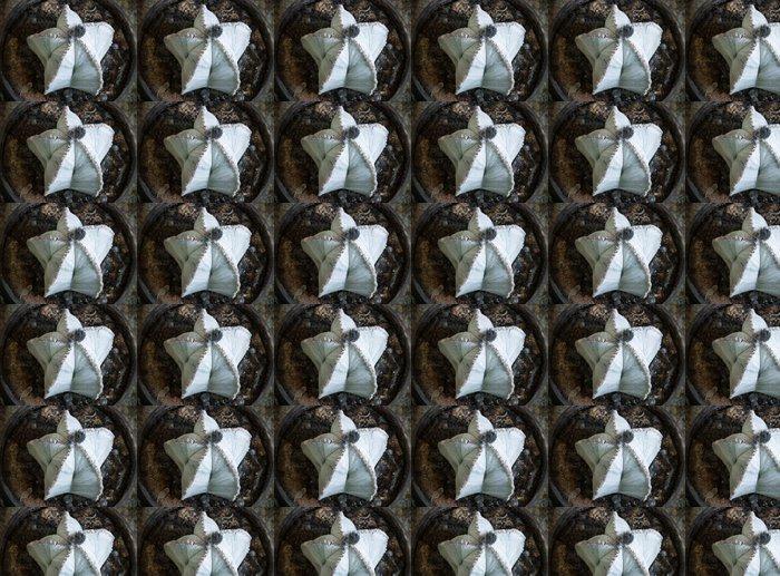 Vinylová Tapeta Astrophytum myriostigma - Rostliny