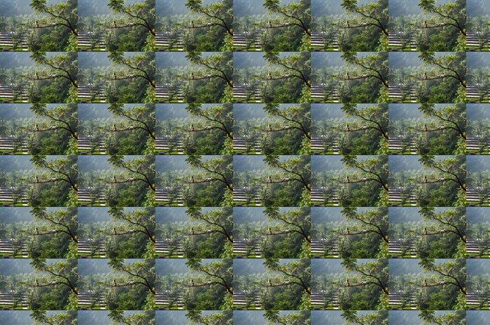 Vinylová Tapeta Makak (Macaca fascicularis) v pralese sedí na stromě ve velikostech S - Džungle
