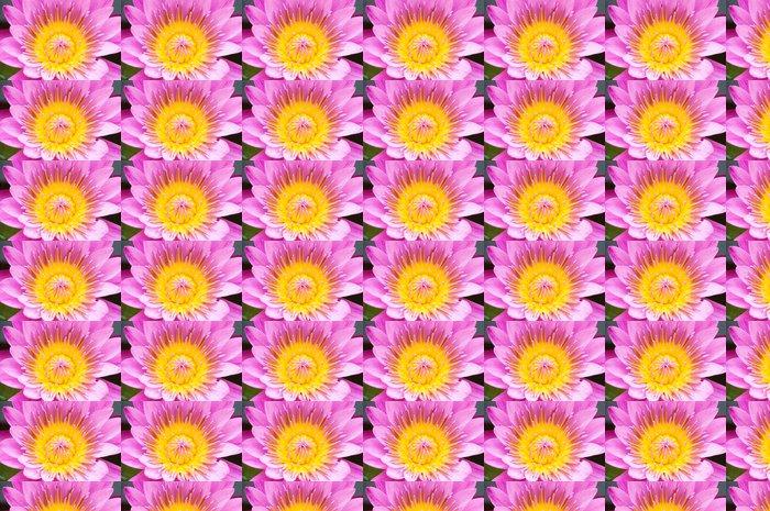 Vinylová Tapeta Close-up pylu a okvětní lístky leknín - Květiny