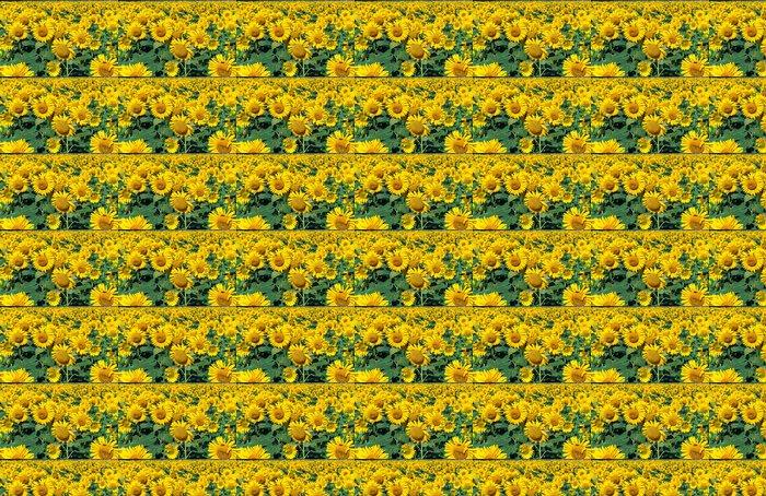 Vinylová Tapeta Sunflowers - Přírodní krásy