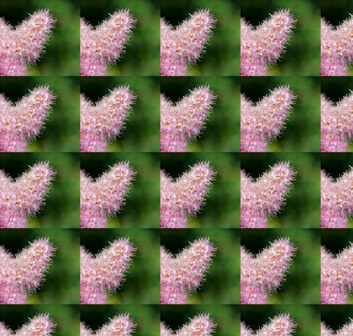 Vinylová Tapeta Spierstrauchblüte (Spiraea salicifolia) Macroaufnahme - Květiny
