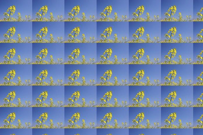 Vinylová Tapeta Čerstvé květy řepky na jaře s jasně modré oblohy - Roční období