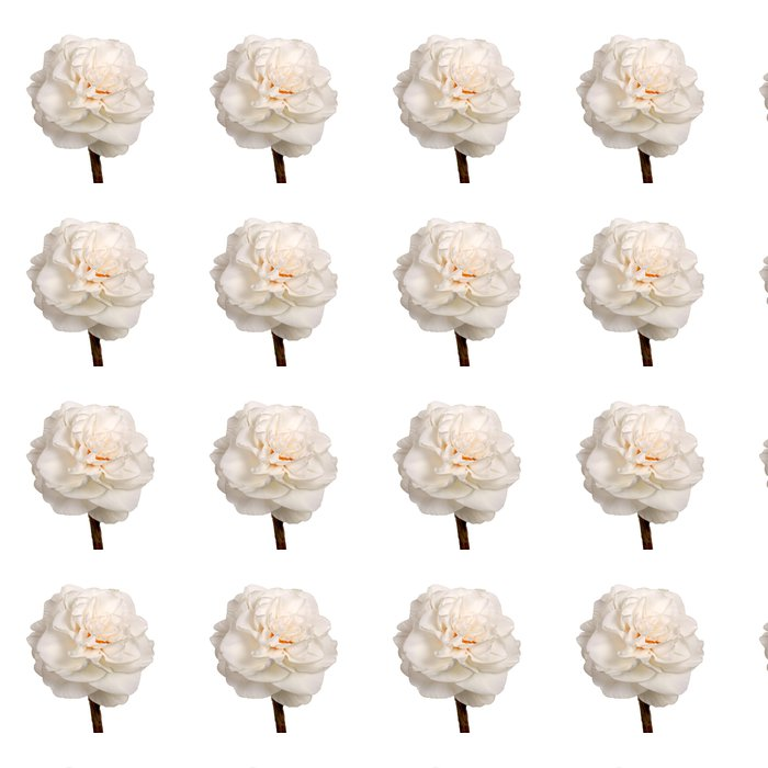 Vinylová Tapeta Single white double Narcis izolovaných na bílém - Květiny