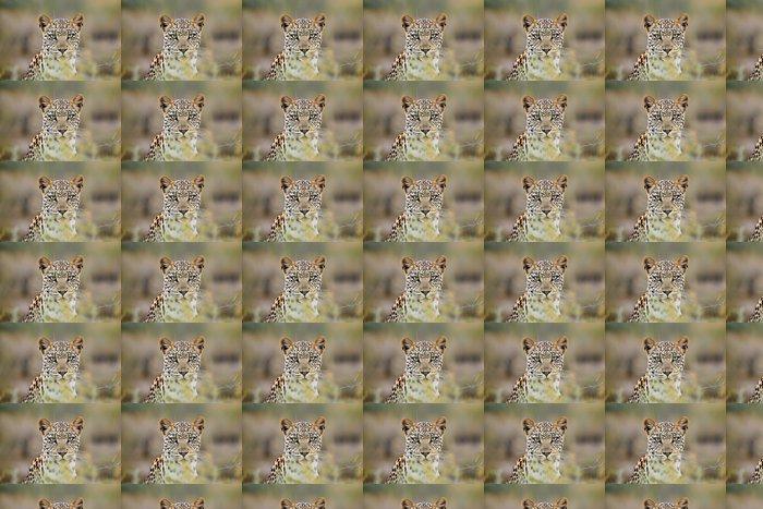 Vinylová Tapeta Leopard portrét, Kalahari poušť, Jižní Afrika - Savci