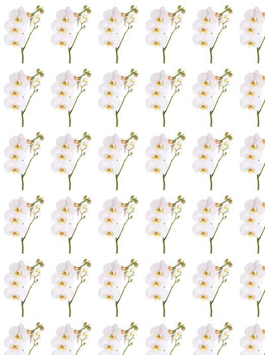 Vinylová Tapeta Jemný krásné orchideje izolovaných na bílém - Květiny