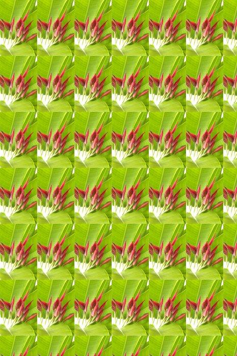 Vinylová Tapeta Kytice z Canna lilie - Květiny
