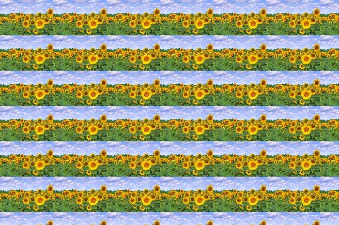Vinylová Tapeta Slunečnicové pole - Roční období