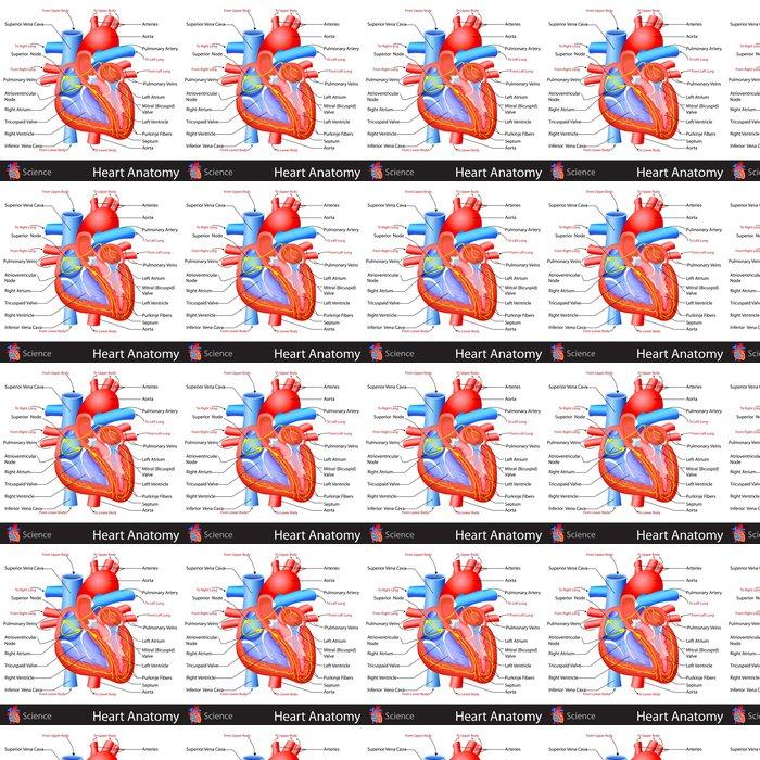 Großartig Elektrische Anatomie Des Herzens Bilder - Anatomie und ...