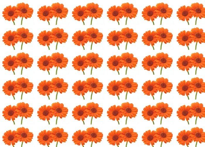 Vinylová Tapeta Gerbera - Květiny