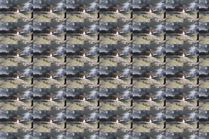 Vinylová Tapeta Watt běžci na kamenech 1.4 - Ptáci