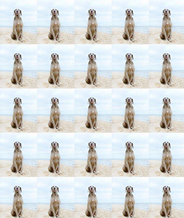 Vinylová Tapeta Pes čeká na svého majitele na pobřeží - Savci