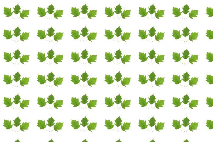 Vinylová Tapeta Elsbeere (Sorbus torminalis) - Stromy