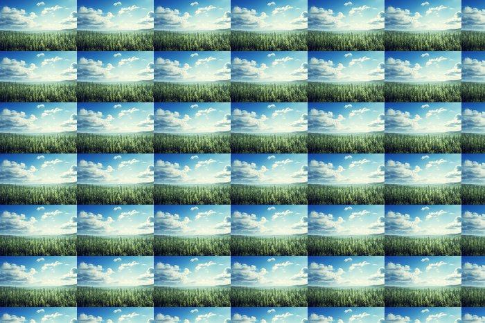 Vinylová Tapeta Jedle les v slunečný den - Lesy