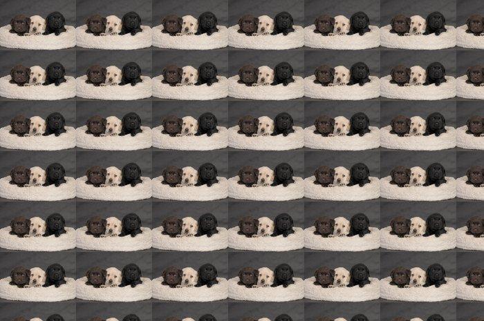 Vinylová Tapeta LABRADOR Cucciolo 60 GG. - Savci
