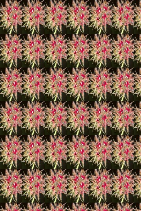 Vinylová Tapeta Starry Clover (Trifolium stellatum) květ. - Květiny