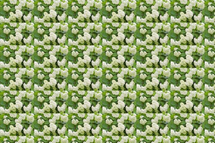 Vinylová Tapeta Bílá hortenzie po dešti - Roční období