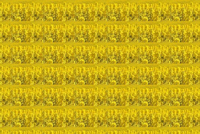 Vinylová Tapeta Řepka pole nebo řepkový rostlin, zblízka obraz - iStaging