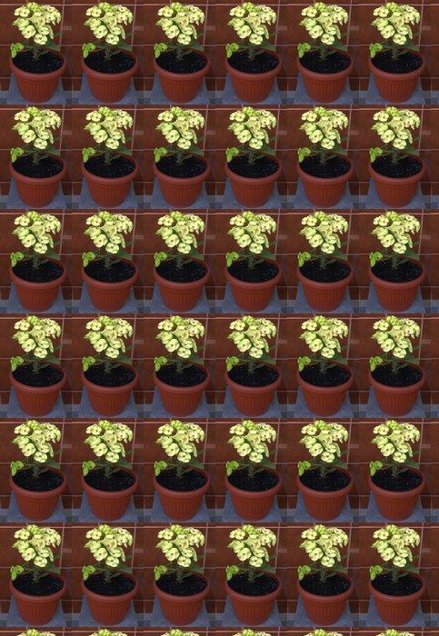 Vinylová Tapeta Pryšec zářivý-mili žlutý květ - Zemědělství