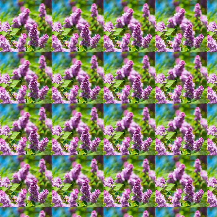 Vinylová Tapeta Krásné kvetoucí květy lila strom na jaře - Příroda a divočina
