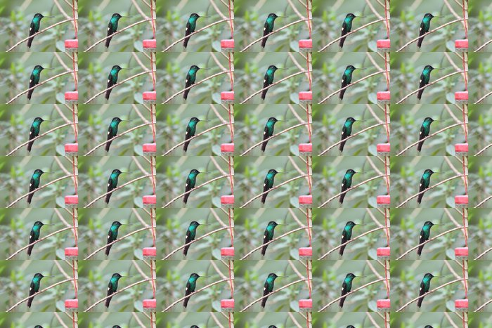 Vinylová Tapeta Buff-okřídlený Starfrontlet - Ptáci