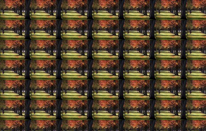Vinylová Tapeta Stromy na podzim v řadě - Roční období