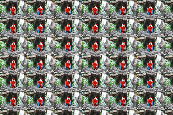 Vinylová Tapeta Red papoušek sedí na větvi - Ptáci