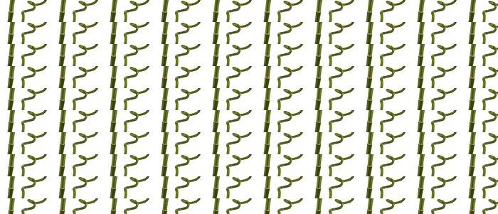 Vinylová Tapeta Zelené bambusové izolovaných na bílém - Rostliny