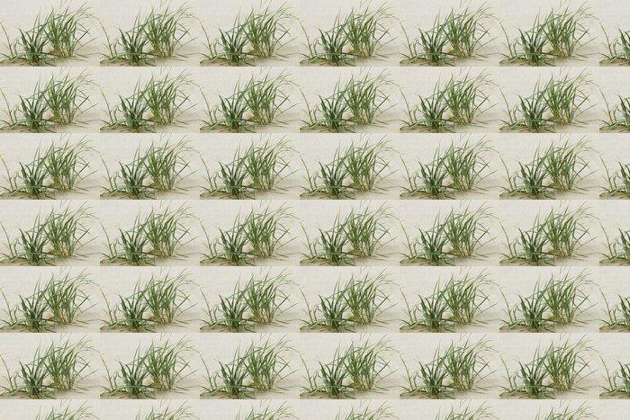 Vinylová Tapeta Zelená tráva na písku. - Roční období