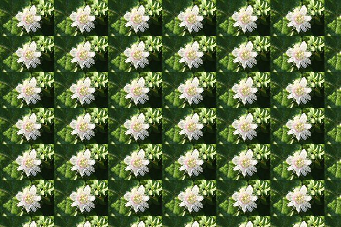 Passiflora foetida L. Vinyl Wallpaper - Flowers