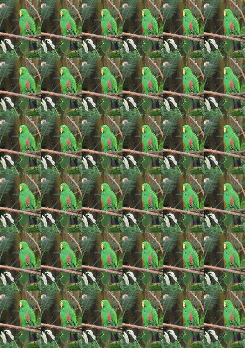 Vinylová Tapeta Muž Eclectus Parrot (Eclectus roratus) - Témata