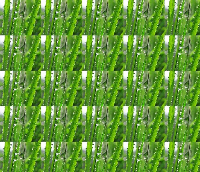 Vinylová Tapeta Čerstvá tráva s kapkami rosy zblízka - Roční období