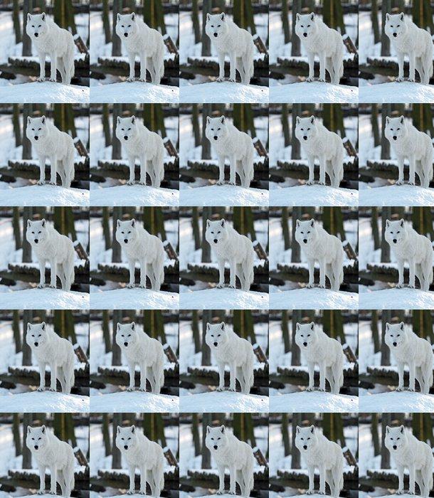 Vinylová Tapeta Polární vlk - Témata
