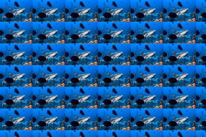 Vinylová Tapeta Šedý žralok čelisti připravené k útoku pod vodou zblízka portrét - Vodní a mořský život