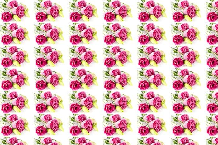 Vinylová Tapeta Izolované růžové květy - Květiny