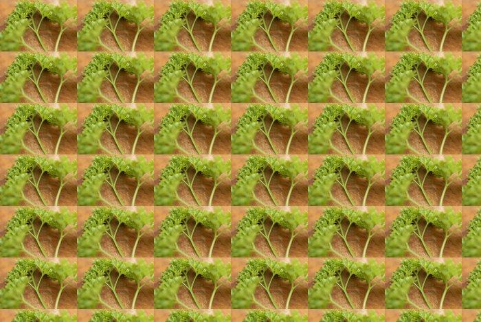 Vinylová Tapeta Spousta čerstvě odebrané petržele (Petroselinum crispum). - Domov a zahrada