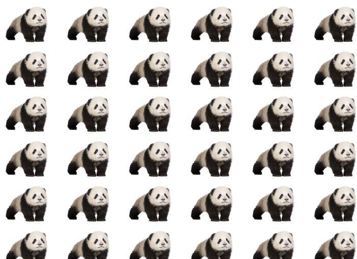 Vinylová Tapeta Giant Panda (6 měsíců) - Ailuropoda melanoleuca - Nálepka na stěny