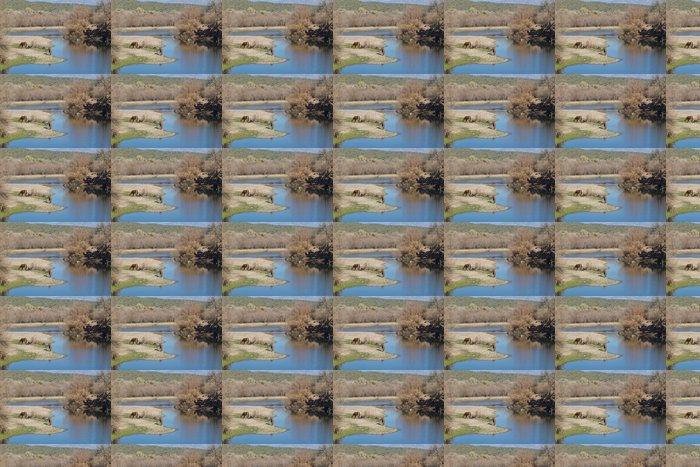 Vinylová Tapeta Divocí koně na Salt River Arizona - Savci
