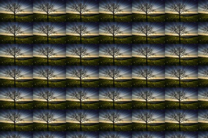 Vinylová Tapeta Strom při západu slunce - Příroda a divočina
