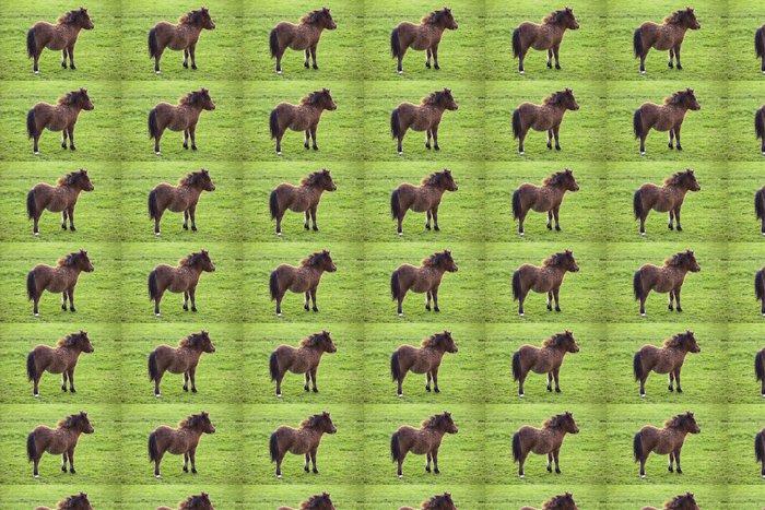 Vinylová Tapeta Miniaturní kůň hříbě shetlandský pony - Savci